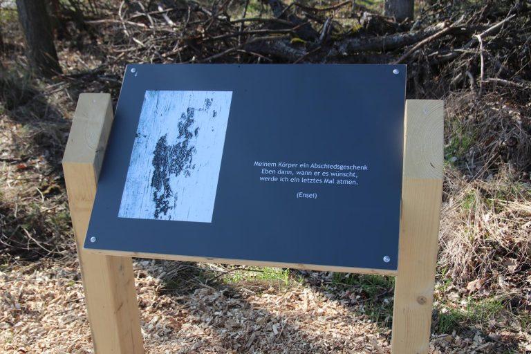 Die Schäden, die der Borkenkäfer diesem Baum zugefügt hat, wird durch Überbelichtung verdeutlicht.