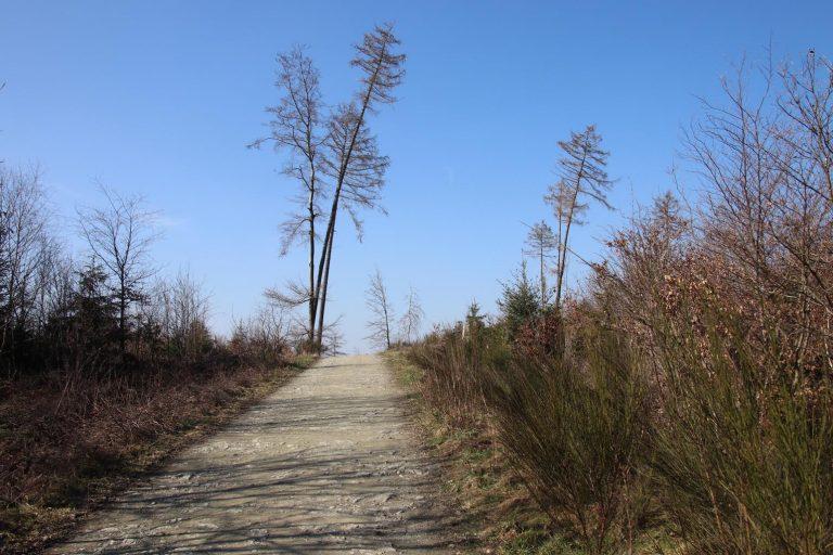 Die Natur bahnt sich im ehemaligen Waldgebiet wieder ihren Weg.