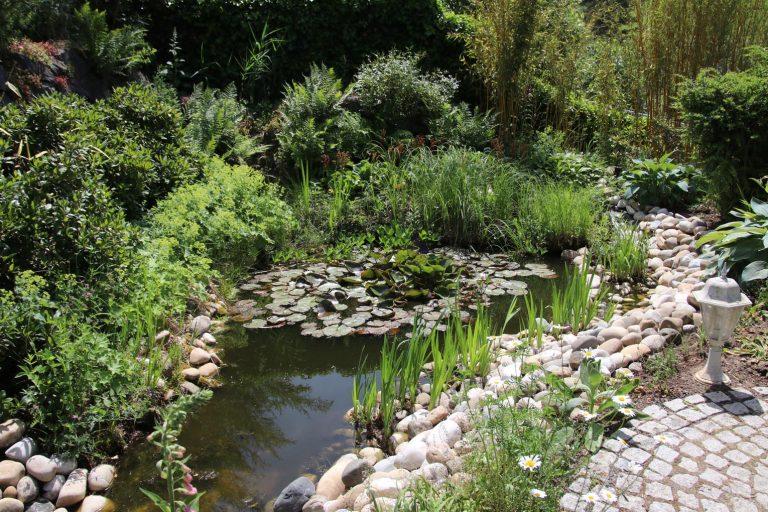 Libellen lieben diesen Teich.