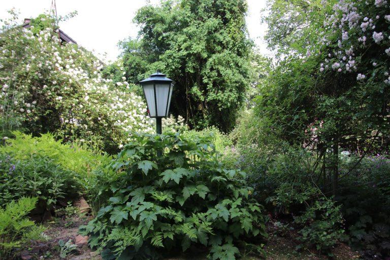 Der parkähnliche Garten von Edith und Volker Gottwald ist in vier Jahrzehnten entstanden.
