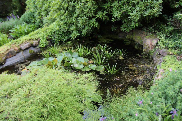 Ob an diesem Teich Froschkönig-Alarm herrscht?