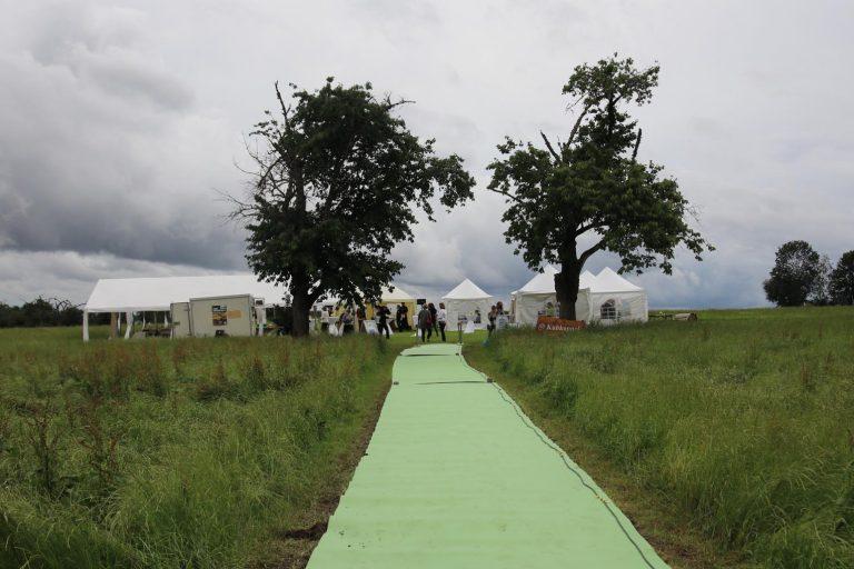 Über den grünen Teppich geht es zur Fair Trade-Feier