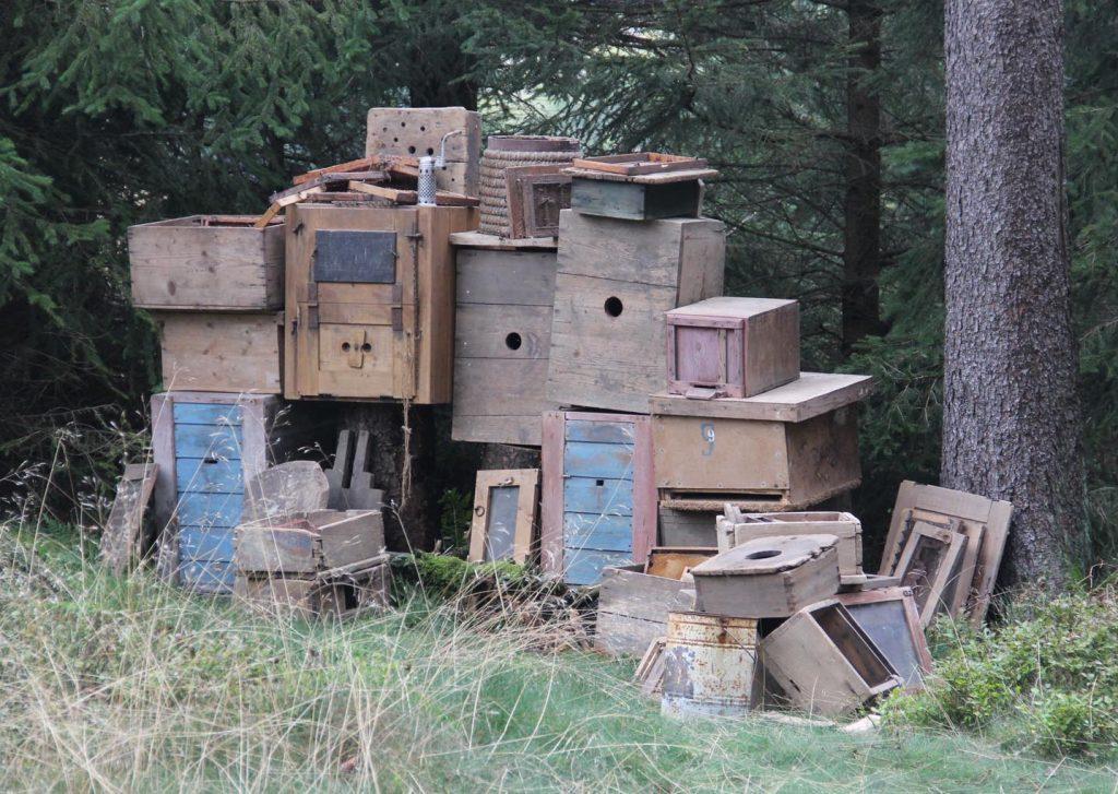 Szenenbild im Wald: gestapelte Bienenkästen. - Foto: Sabine Neugebauer